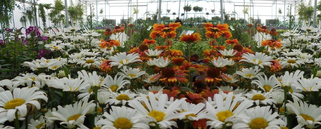 Pépinières Remacle S.R.L. -  Pépinière (fleurs/plantes)